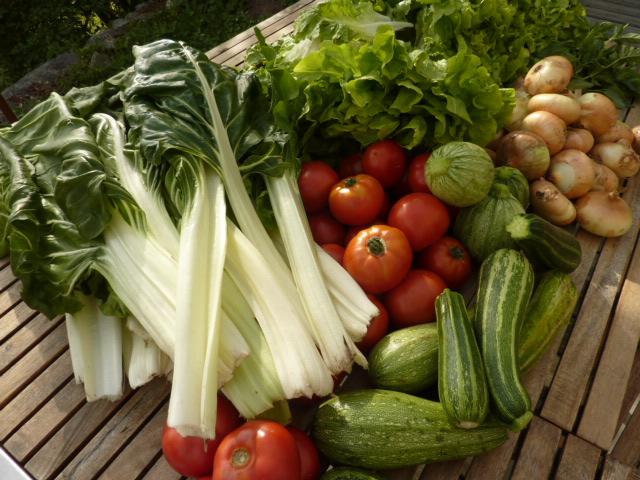 reçus tout droit du producteur : les légumes pour les lasagnes et les tartines
